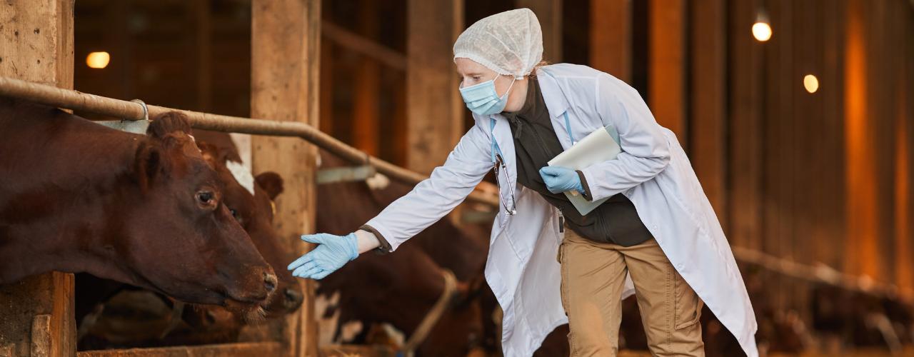Saúde Bovina: Ameaças E Prevenção!