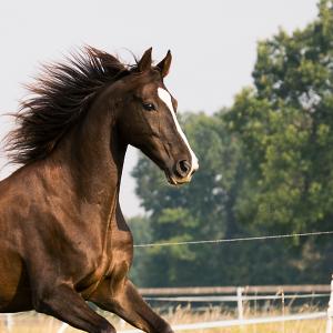 Conheça Os Cavalos Da Raça Campolina