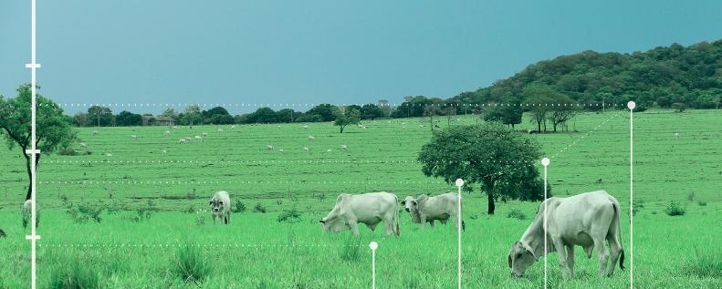 Veja Como Aumentar A Receita Na Pecuária De Corte