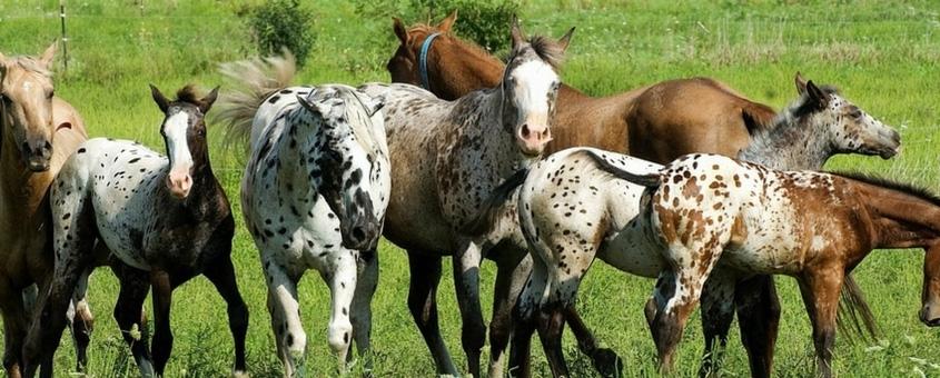 As Várias Formas De Lucrar No Ramo Bilionário Dos Cavalos