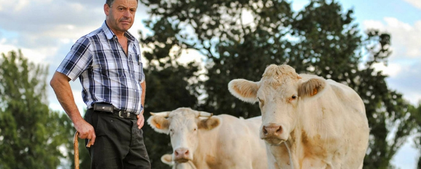 A Importância Da Pecuária Na Sua Alimentação