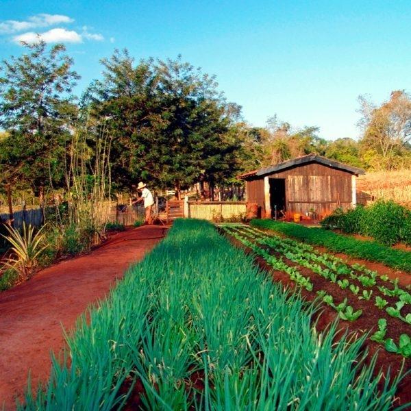 a agricultura do brasil
