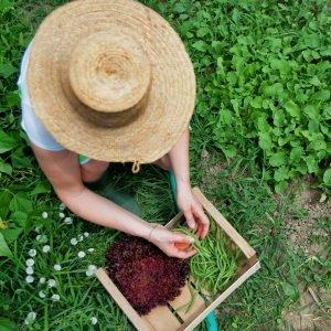 Agronegócio como base econômica