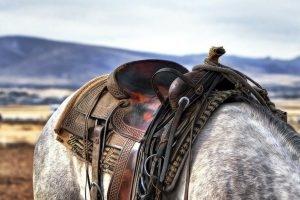 os melhores equinos para montaria são cavalos de sela