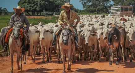 Cavalo de gado