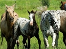 Agronegócio de equinos no Brasil