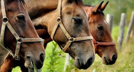 mercado dos cavalos