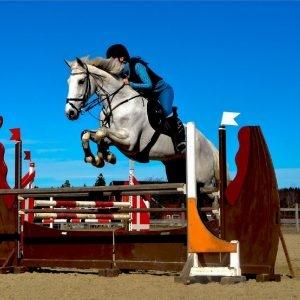 Cavalos no esporte geram lucro