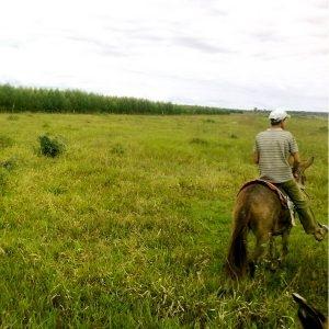 modernização da pecuária do Brasil através do gerenciamento de terra