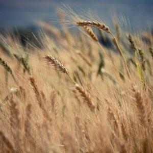 gerenciamento da terra para melhorar o pasto