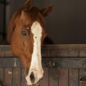 manejo de cavalos