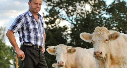 bovinocultura leiteira no Brasil