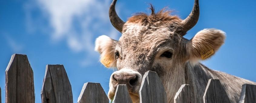 Aprimoramentos necessários na produção de leite