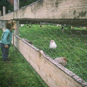 Setor familiar agricola