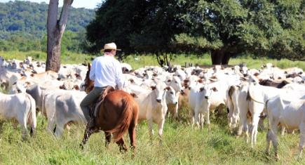 Pastagem para gado de corte